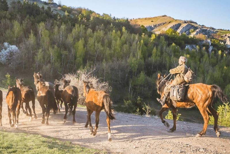 Табун лошадей на горе Демерджи